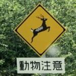 道路脇で動物の死骸を見てしまったらゴミ袋だと思って通り過ぎるべし!