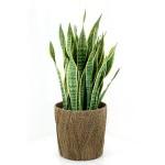 邪気・病気チェックには観葉植物を