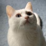 猫は犬よりも霊に敏感なので飼猫の動きを注意して見ましょう。